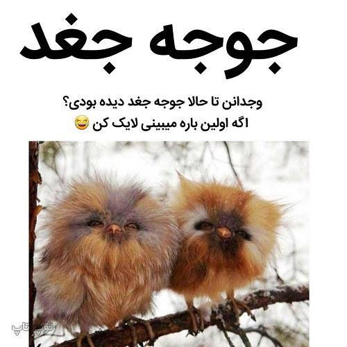 عکس نوشته خنده دار از حیوانات