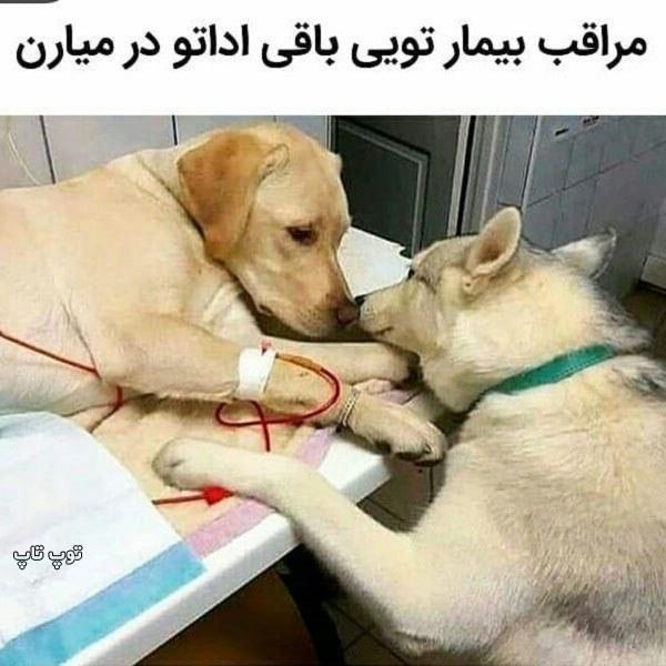 عکس نوشته جذاب حمایت از حیوونات