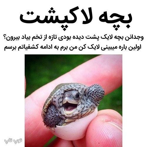 عکس نوشته خنده دار از بچه لاکپشت