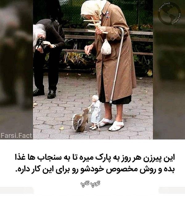 عکس مهربانی مردم با حیوانات