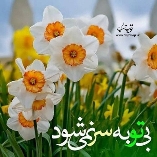 اشعار زیبا درباره گل نرگس
