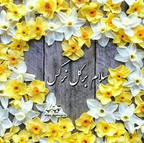 شعر برای گل نرگس