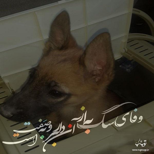 عکس نوشته بنازم وفای سگ