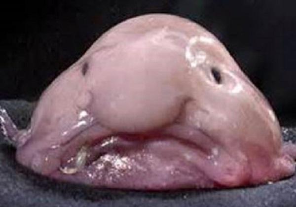 زشت ترین ماهی دنیا