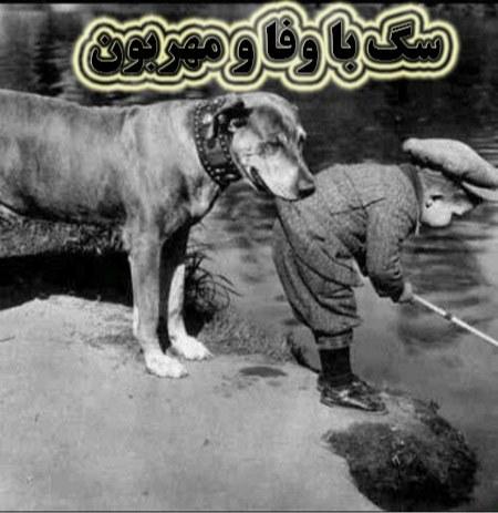 عکس نوشته راجب وفای سگ