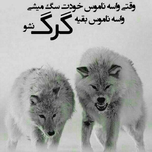 عکس نوشته گرگ باش