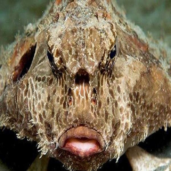 عجیب ترین ماهی دنیا  ماهی های ترسناک