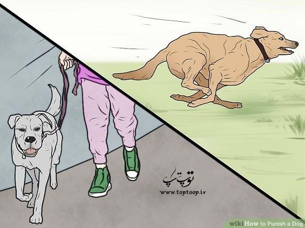 بهترین روشها برای تنبیه سگ