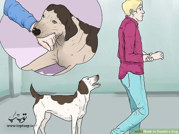 تنبیه سگ،روش صحیح تنبیه سگ