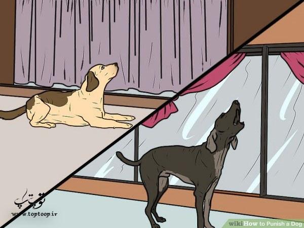 تربیت سگ ، آموزش تنبیه سگ