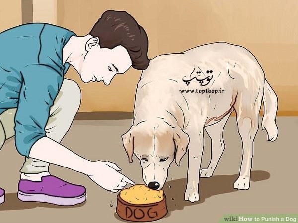 چگونگی تنبیه یا تشویق سگ