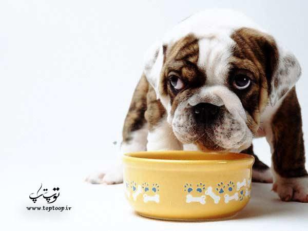 نشانه های غذا نخوردن سگ ، درمان بی اشتهایی سگ ، چرا سگم غذا نمیخوره