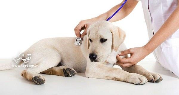 راه های پیشگیری از استفراغ سگ ، درمان استفراغ سگ