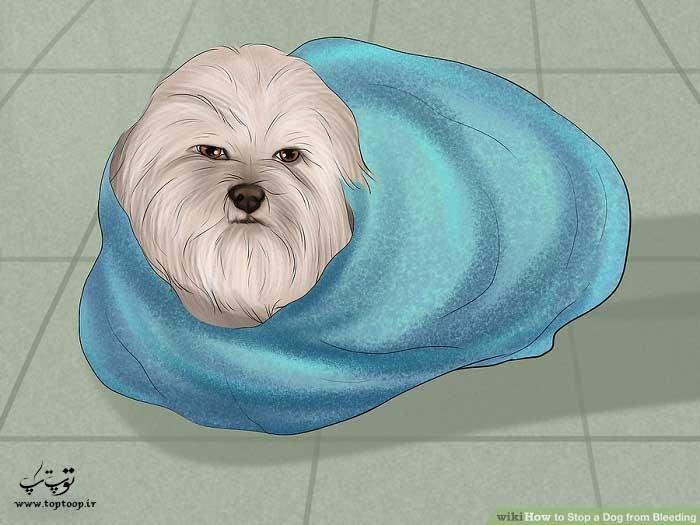 دور سگ را با پتویی بپیچید و گرم نگه دارید