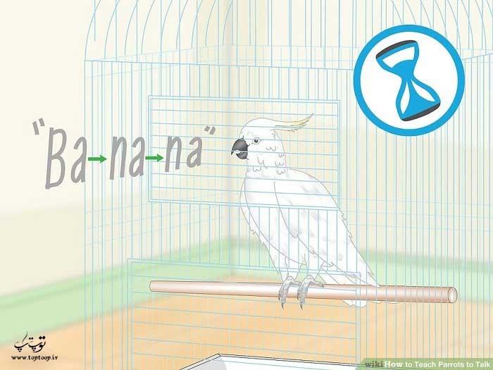 بر نحوه تلفظ کلمات توسط طوطی نظارت کنید