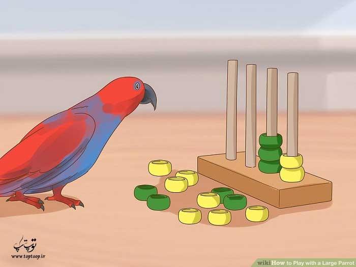 نشان دادن اسباب بازی به طوطی