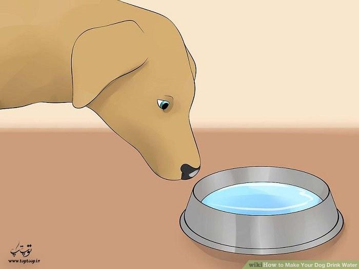 ظرف آب همیشه در دسترس سگ باشد