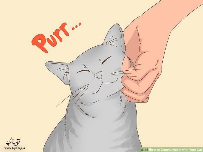 برقراری ارتباط با گربه به جز میو میو کردن