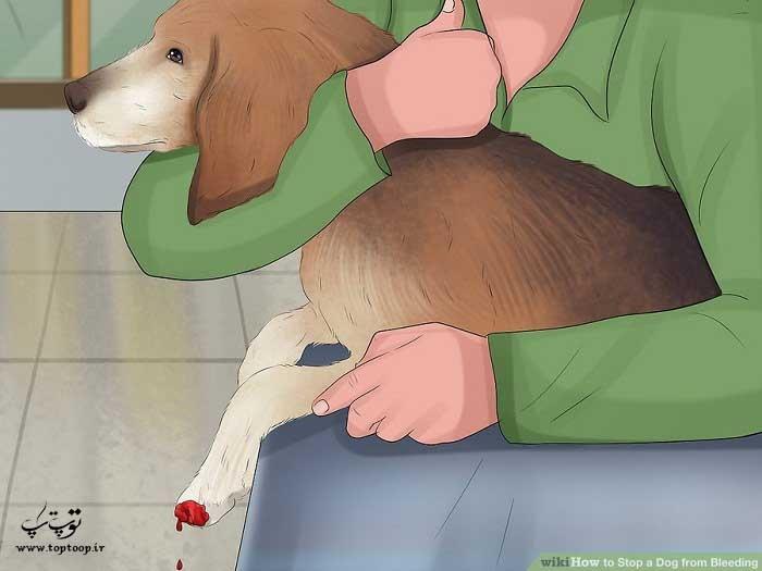 متوقف کردن خونریزی سگ بعد از گرفتن ناخن ها