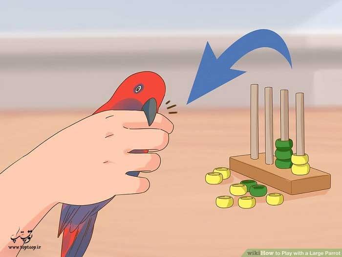 پرنده را با دست جا به جا کنید و گاز گرفتنش را امتحان کنید