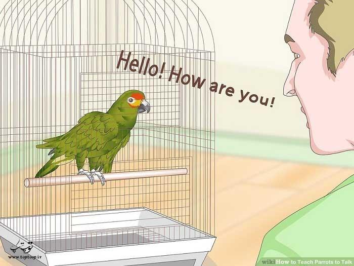 یاد دادن آواز و جملات طولانی به طوطی