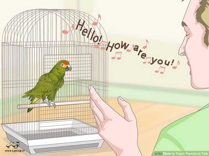 جملات طولانی را با آوازی یکسان برای طوطی بخوانید