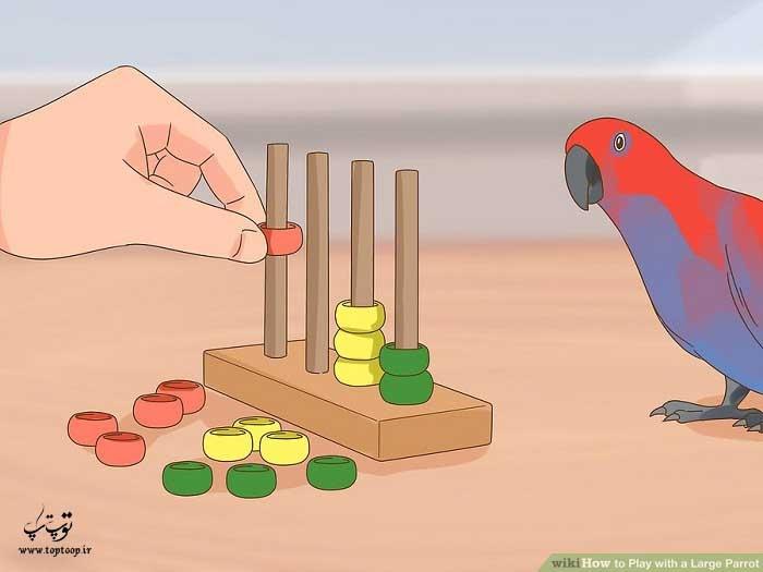 اسباب بازی را در دست بگیرد و به طوطی بازی کردن را نشان دهید