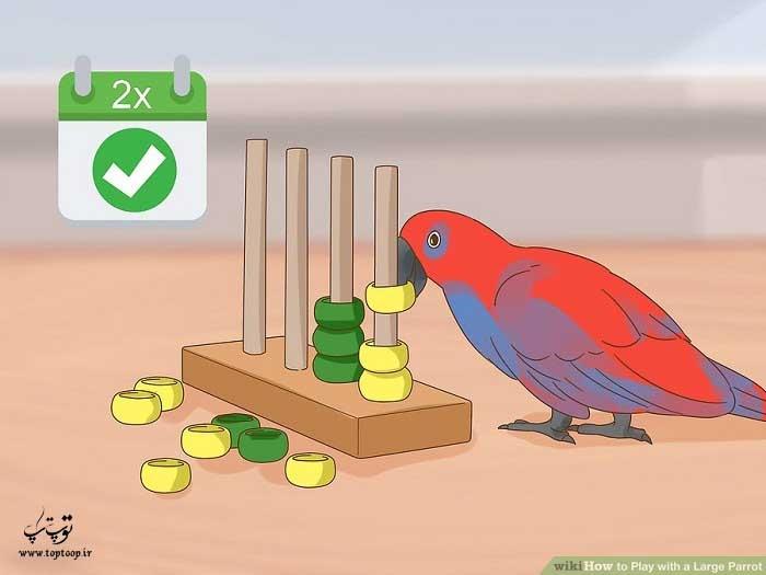 با طوطی خود دو مرتبه در روز بازی کنید