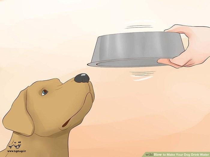 هیجان انگیز کردن ظرف آب سگ