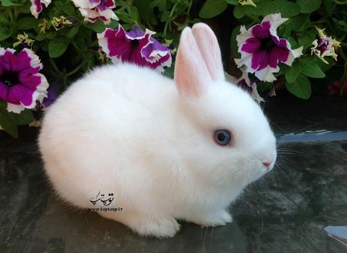 معرفی اسم برای خرگوش های دختر (ماده)