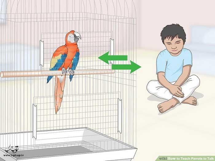 همانطور که با کودک حرف میزنید با طوطی صحبت کنید