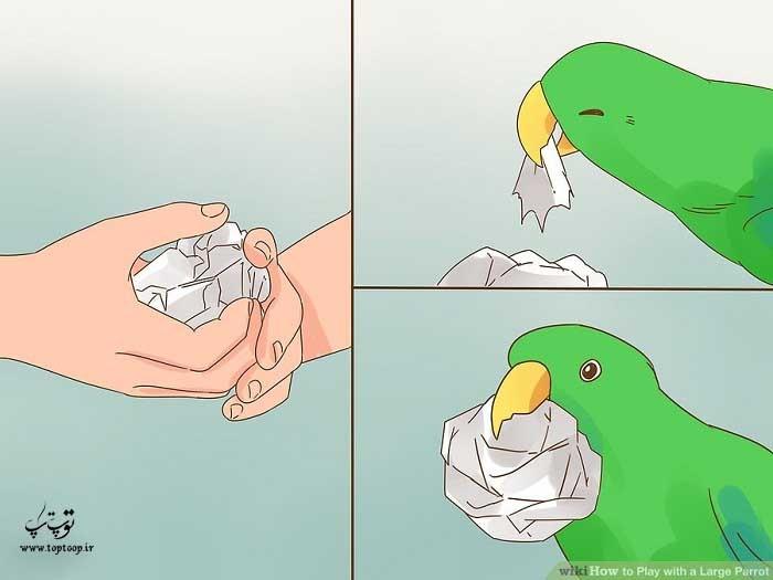 برای بازی با طوطی از گلوله های کاغذی استفاده کنید