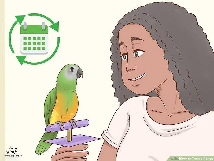 تربیت طوطی را خیلی زود آغاز کنید