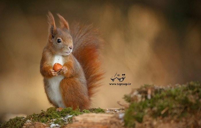 انتخاب اسم زیبا برای سنجاب ماده
