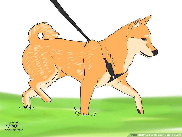 شناخت سگتان