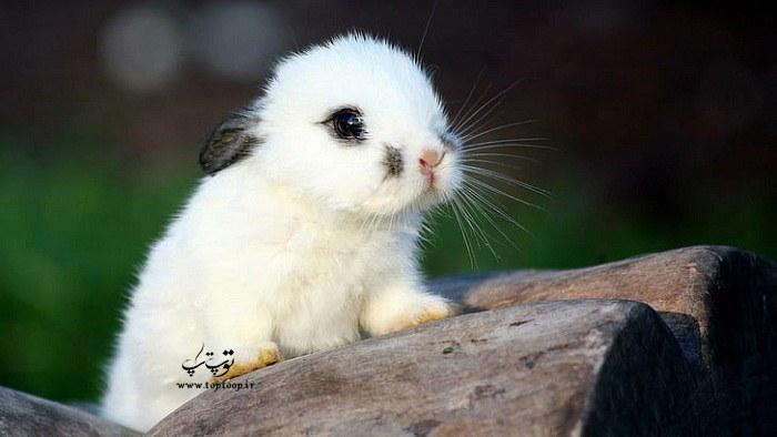اسم های شیک و زیبا برای خرگوش سفید