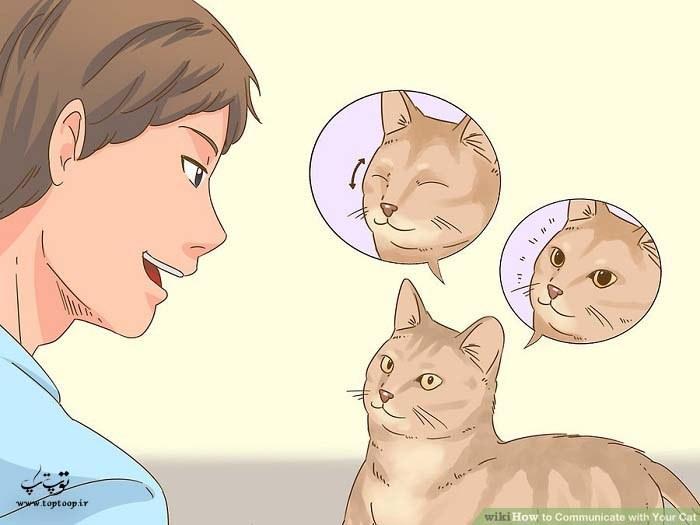 ارتباط چشمی با گربه