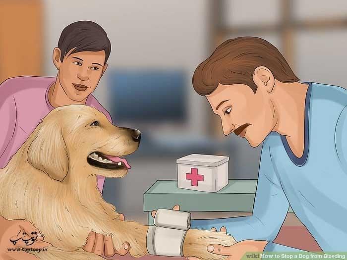 چگونگی کنترل خونریزی سگ