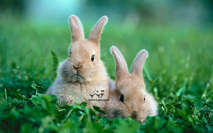 اسم های زیبا برای خرگوش قهوه ای