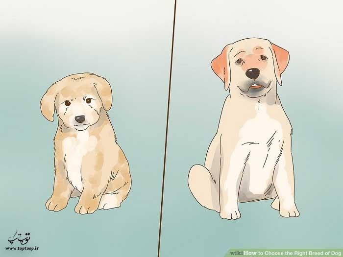 انتخاب نژاد سگ بصورت خالص یا ترکیبی