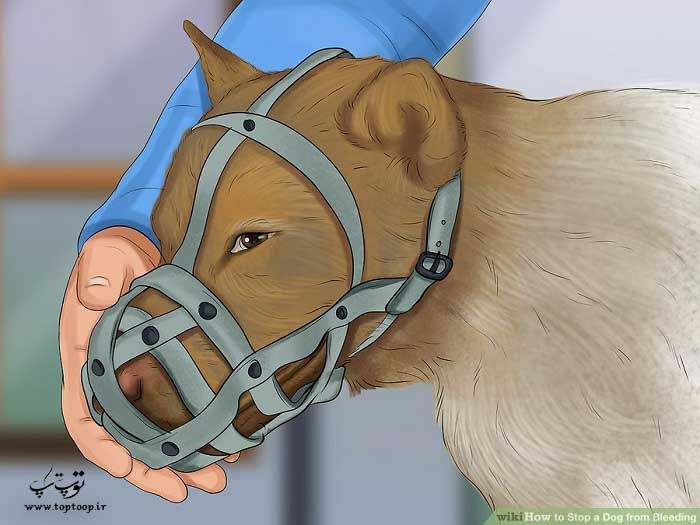 استفاده از پوزه بند سگ برای جلوگیری از گازگرفتن