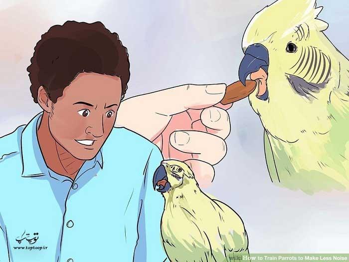 پیگیر بودن برای آموزش طوطی
