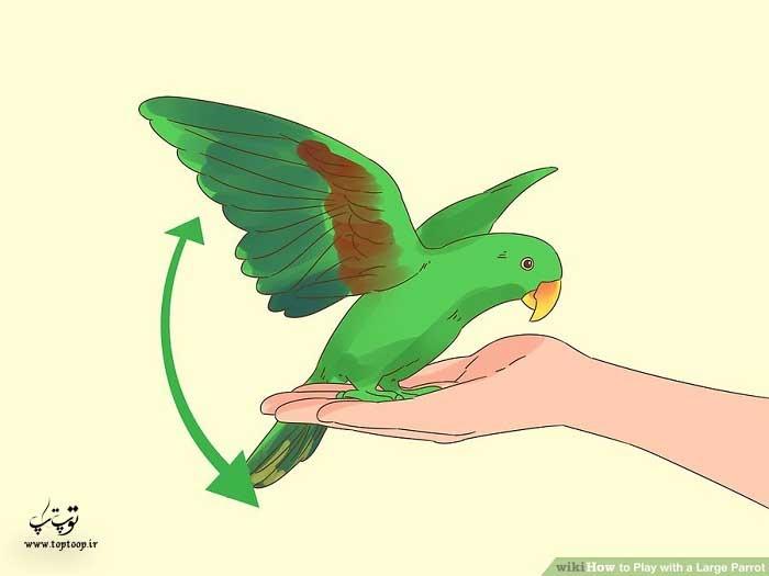ورزش دادن طوطی با بالا و پایین بردن