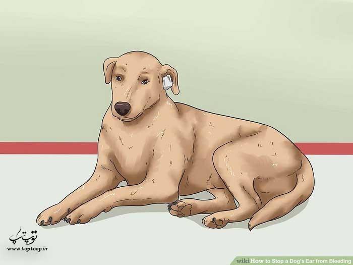 مراقبت از سگ در محلی آرام