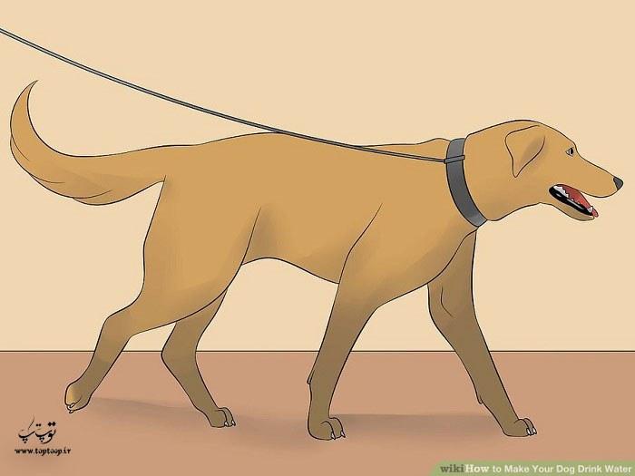 سگ را وادار به فعالیت های ورزشی کنید