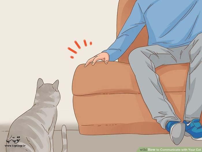 ارتباط غیرکلامی با گربه