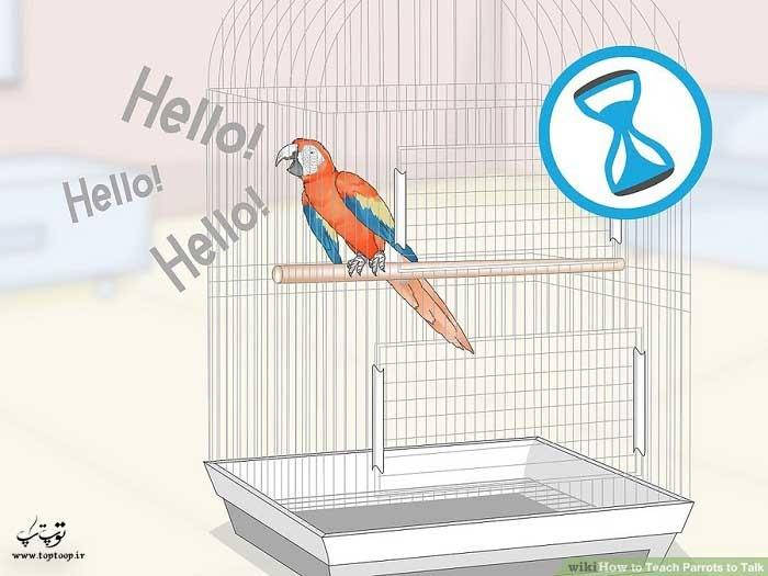 به طوطی برای حرف زدن زمان بدهید