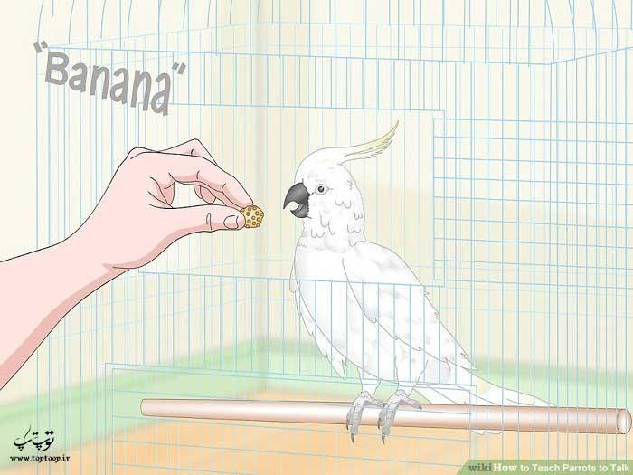 اسم خوراکی های خوشمزه را به طوطی یاد بدهید