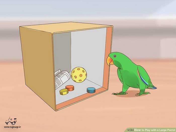 جعبه جستجو در اختیاط طوطی بگذارید تا بازی کند