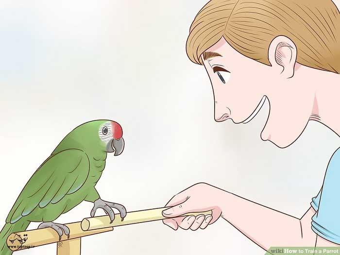آموزش تکنیک قدم گذاری به طوطی